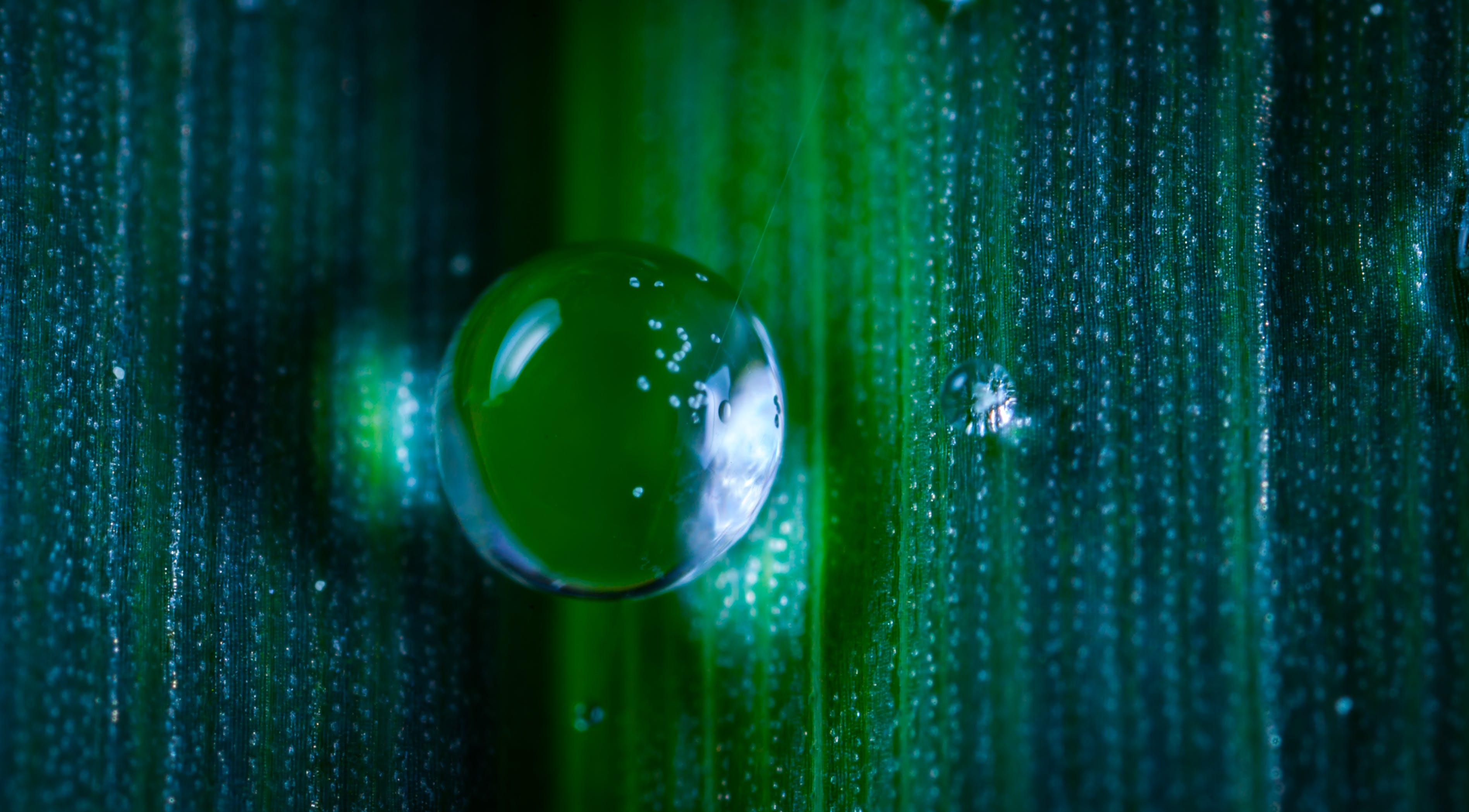 Closeup Photography of Dew