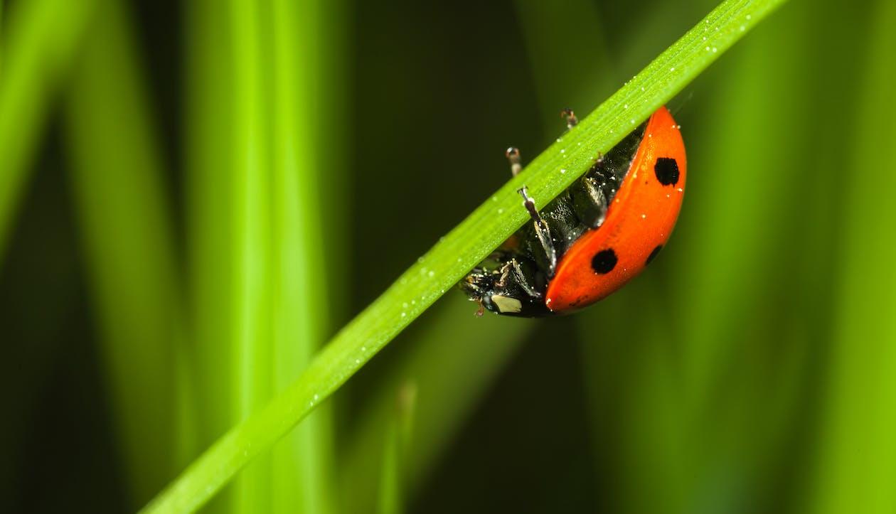 Close-up Photography of Ladybug
