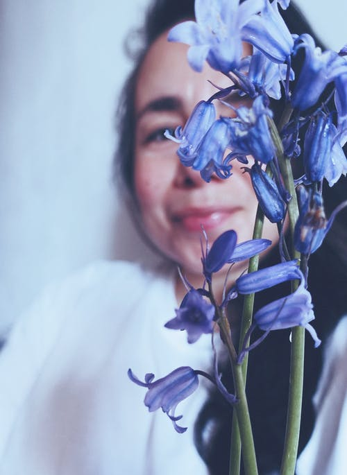 Free stock photo of blue, bluebell, blur background