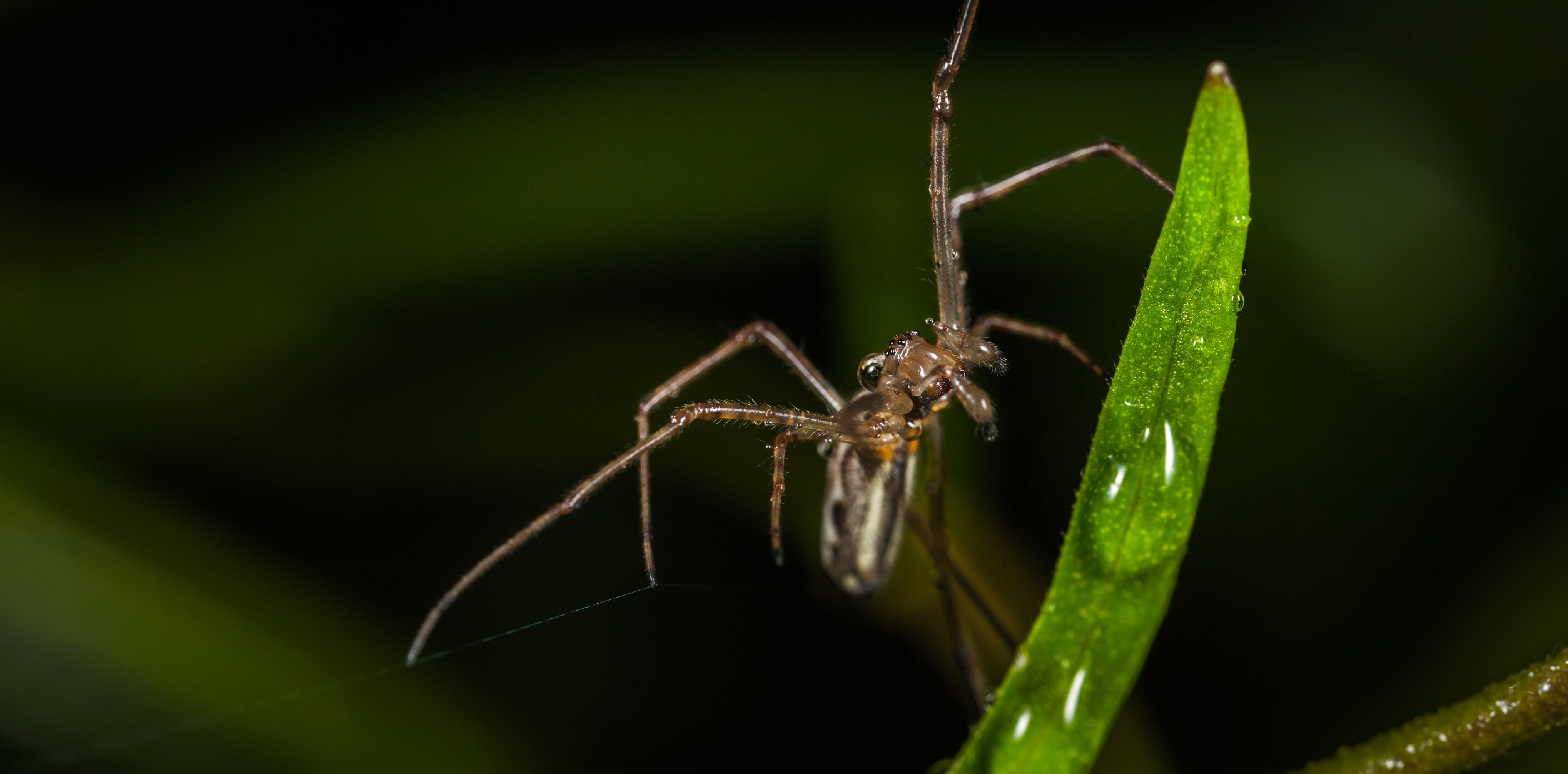 Free stock photo of macro, spider, drop, arachnid