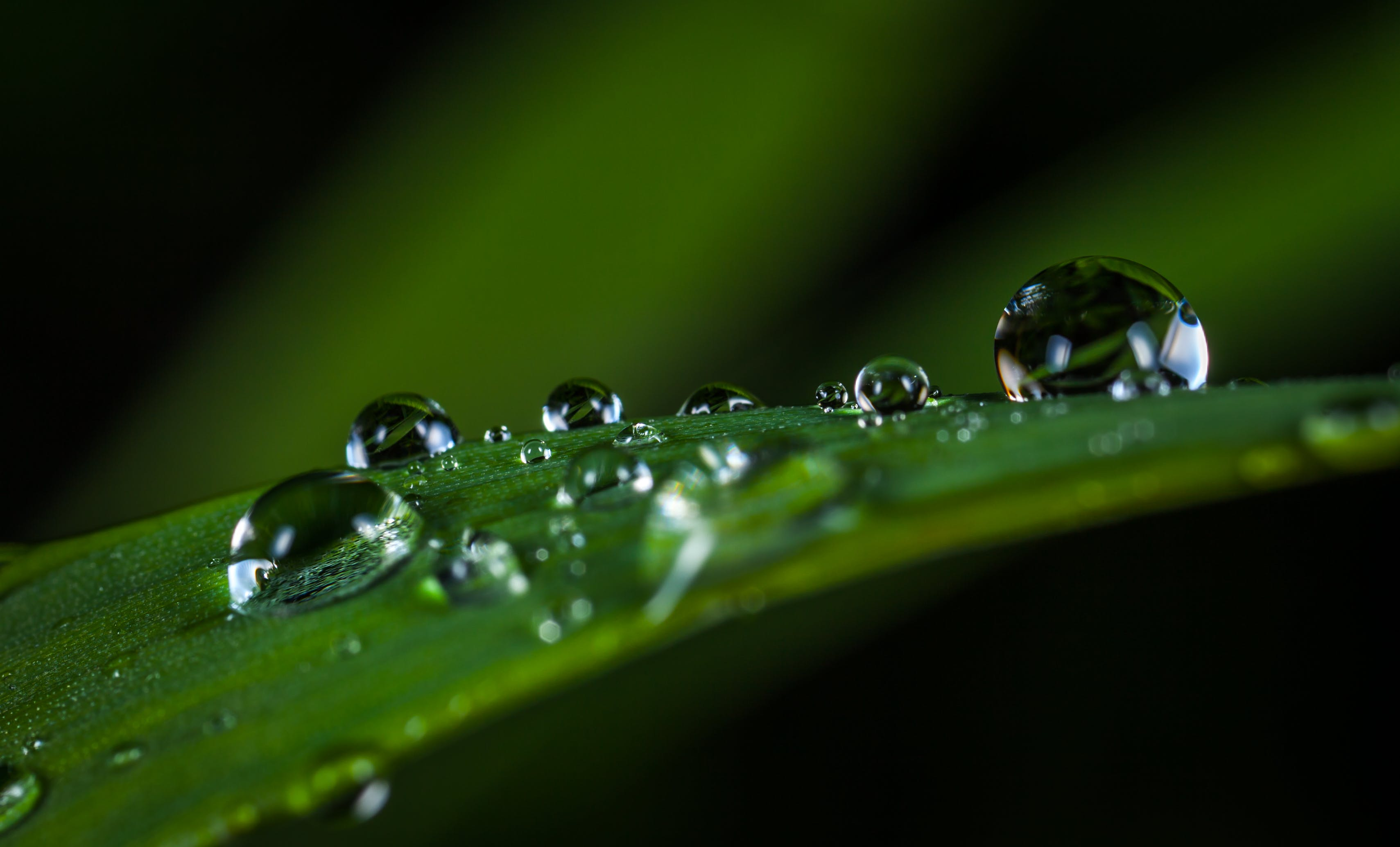 Macro Photography of Water Drops