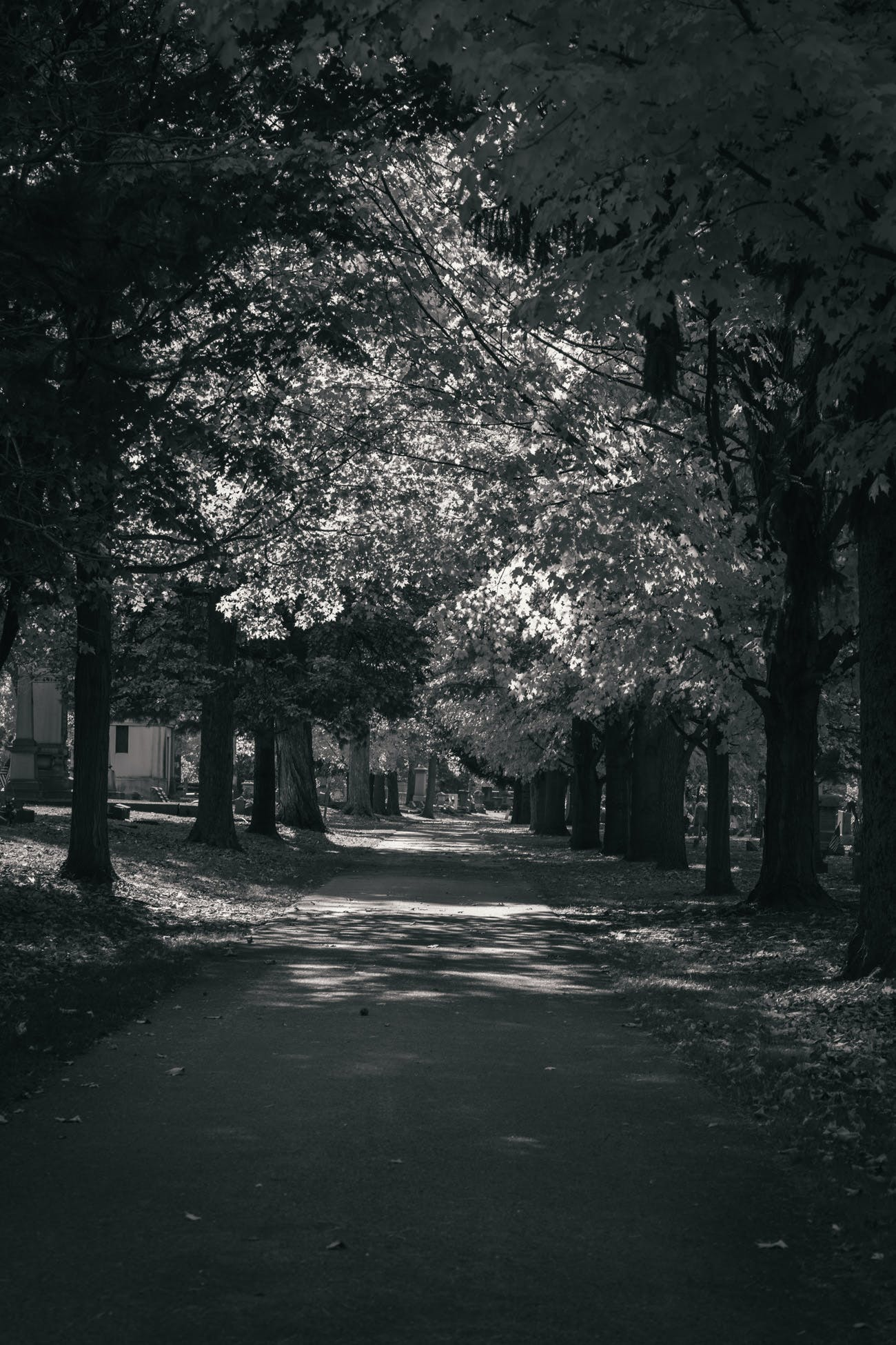 Free stock photo of road, trees, leaves, cemetery