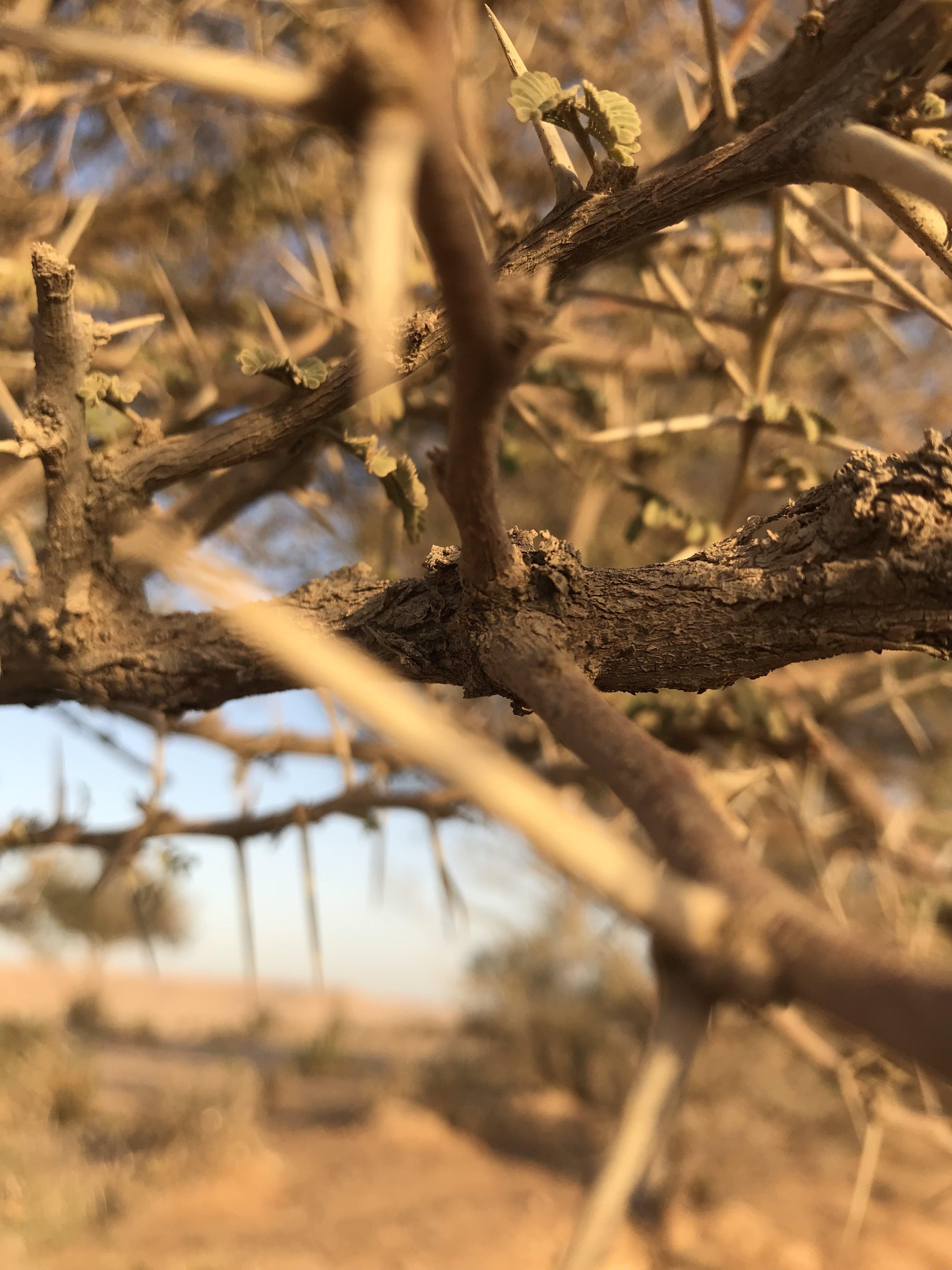 Free stock photo of tree