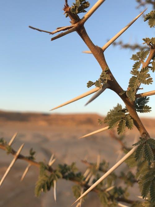 砂漠の無料の写真素材