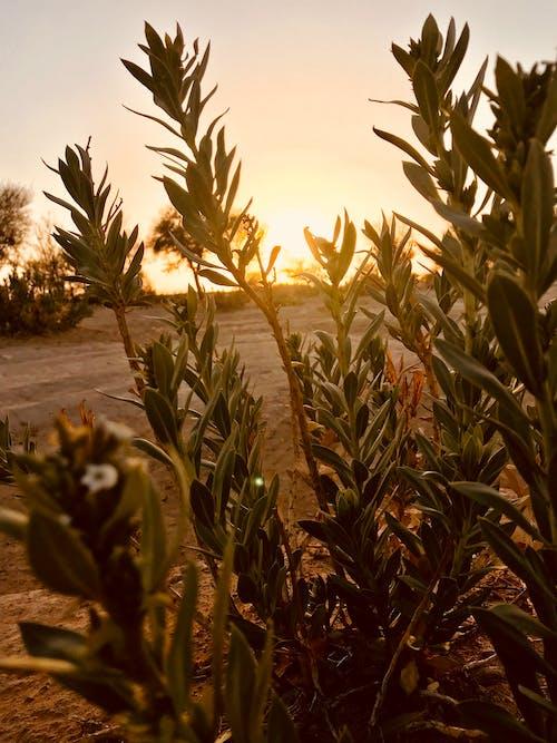 夕焼けの無料の写真素材