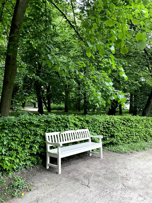 White Wooden Bench Near Green Trees
