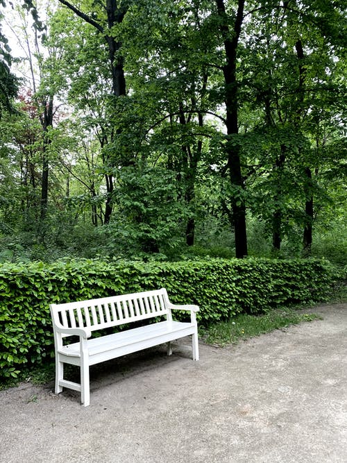 White Wooden Bench Surrounded by Green Trees