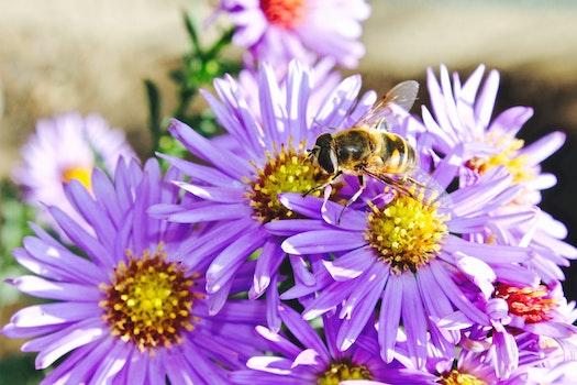 Purple Flower in Macro Photograph