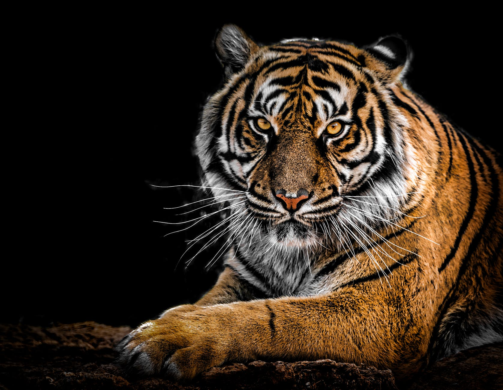 凝視, 動物, 動物攝影