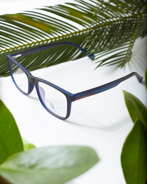 Modern glasses among tropical plant foliage on white background with shade
