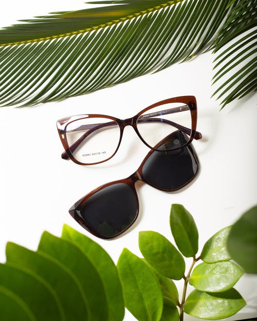 High angle of contemporary spectacles and sunglasses between lush green plant foliage on white background