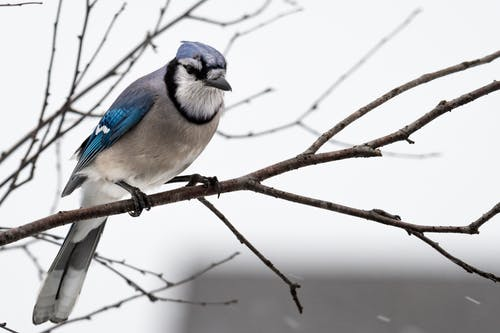 Photography of Blue and Gray Bird