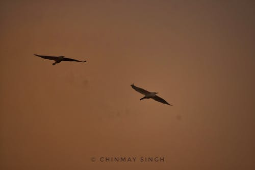 Free stock photo of birds, goldenhour