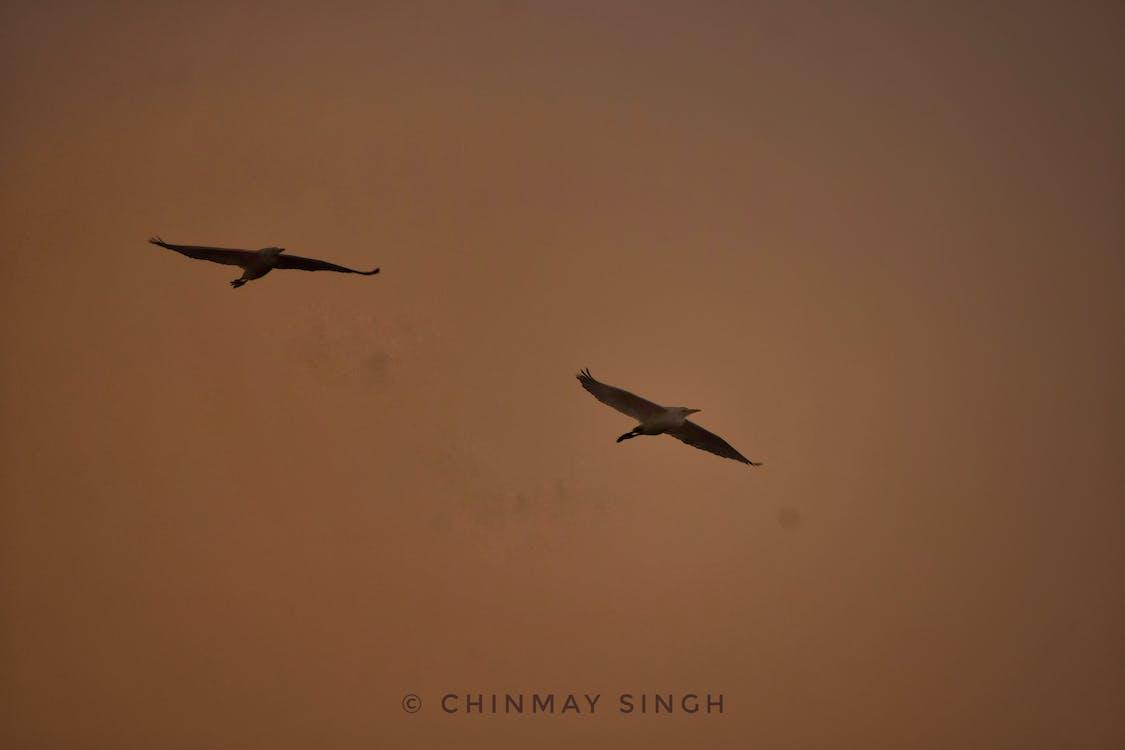 Gratis lagerfoto af #birds #goldenhour