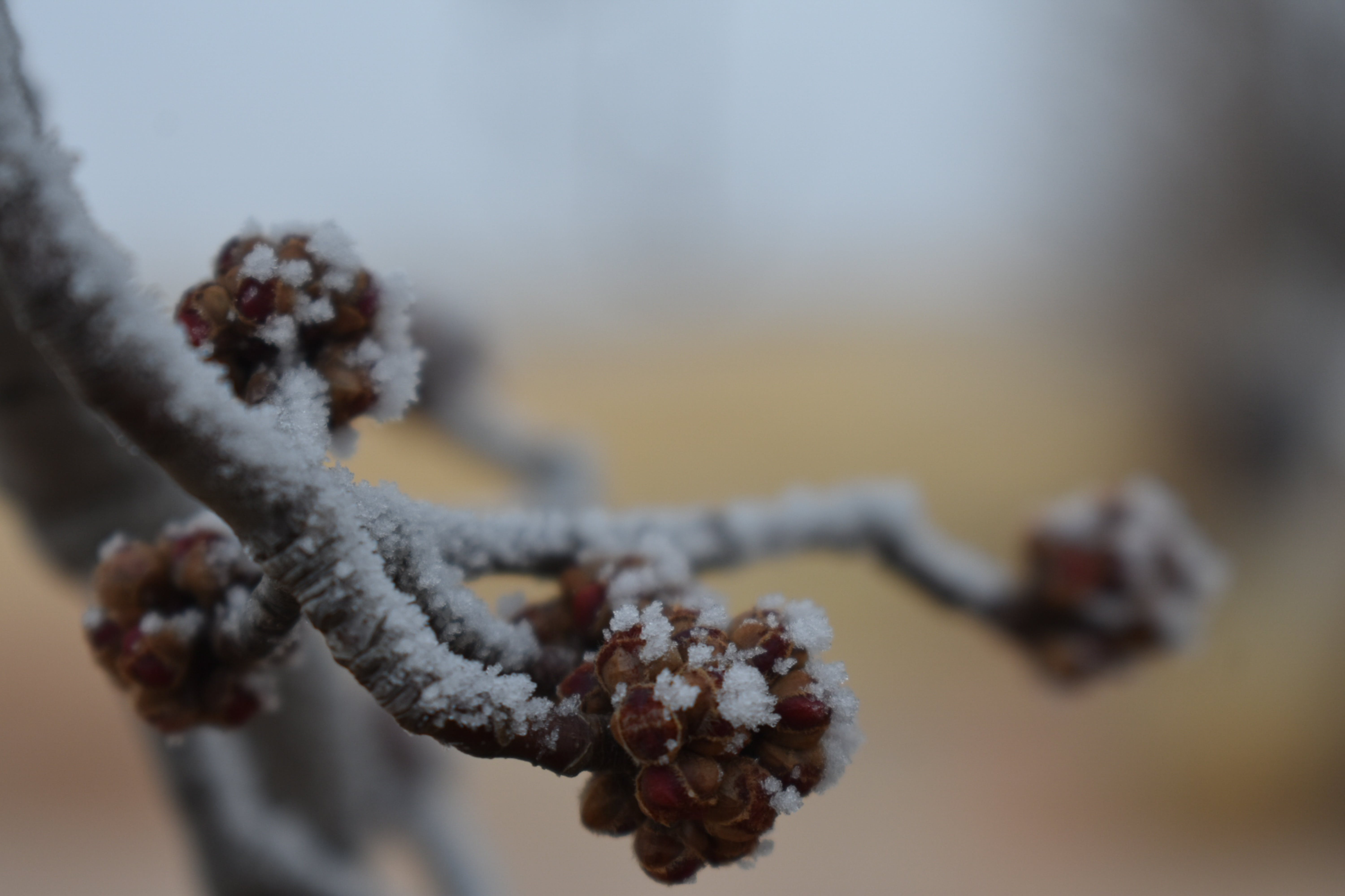 Free stock photo of frost, frosty, limb, snow