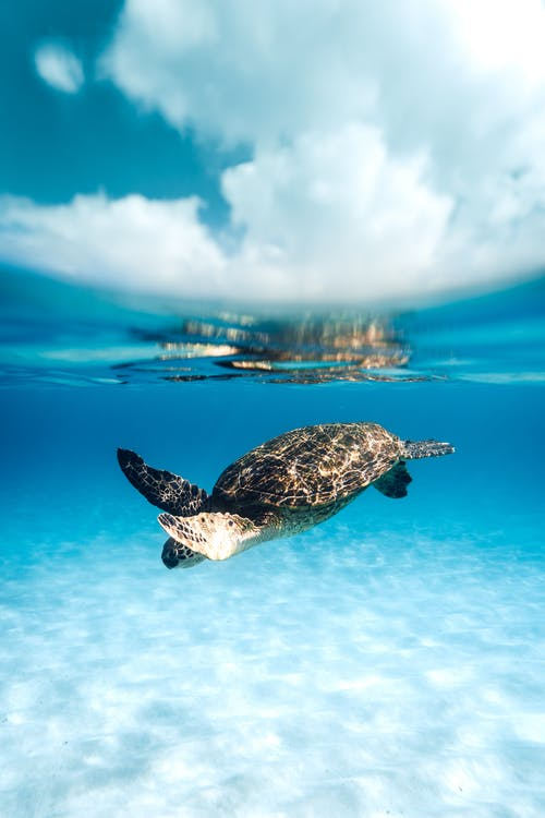 Black and White Turtle on Water