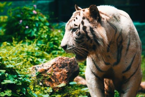 Immagine gratuita di ambiente, animale, animale selvatico, arrabbiato