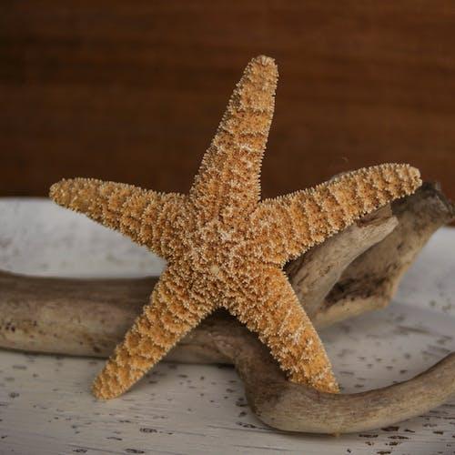 海上生活, 海星, 海洋, 海濱 的 免費圖庫相片