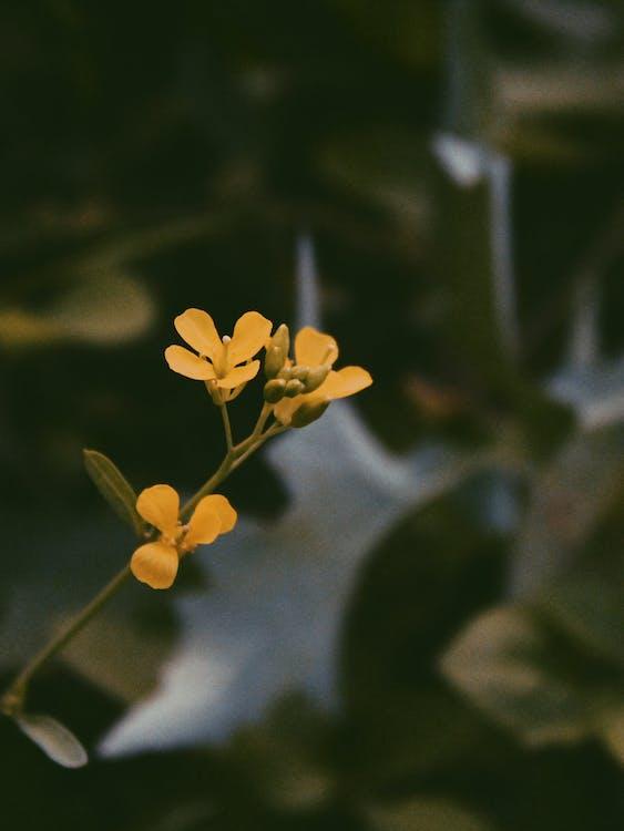 ботанічний, великий план, жовта квітка