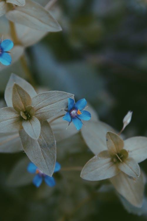 Yakın çekim Mavi Ve Gri çiçek Fotoğrafı