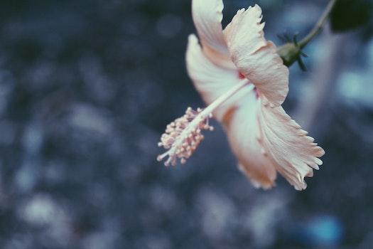 Free stock photo of bokeh, vsco, beautiful flowers