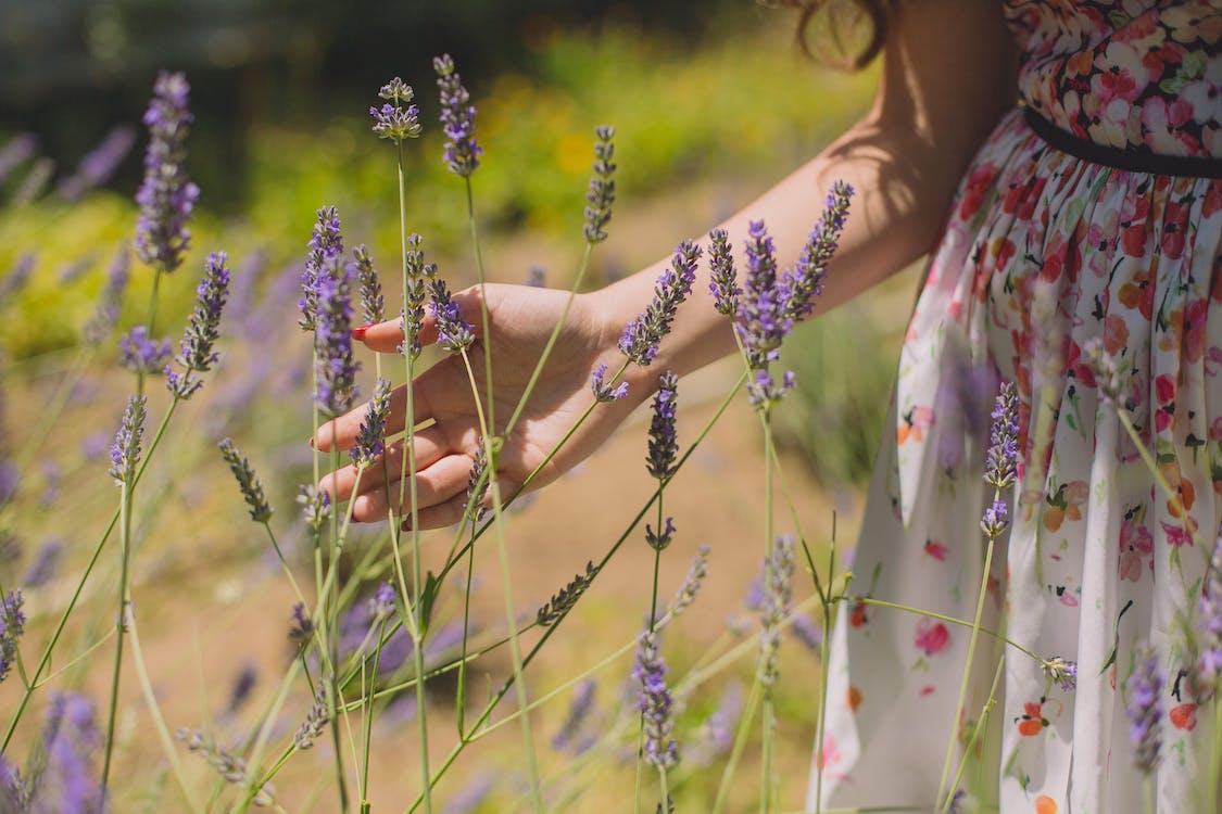 Photographie Peu Profonde De Fleurs Violettes