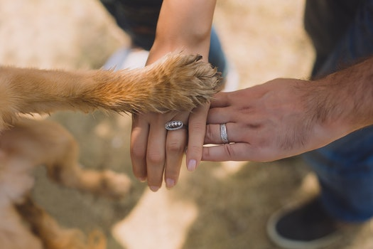 Two Person With Rings on Ring Fingers