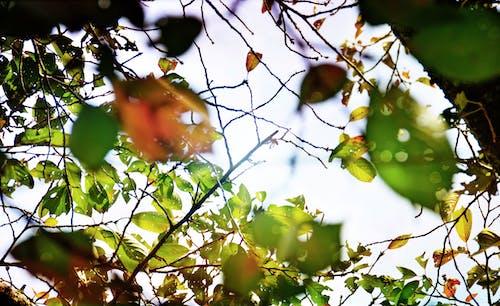 Kostenloses Stock Foto zu grün, naturfotografie, wald