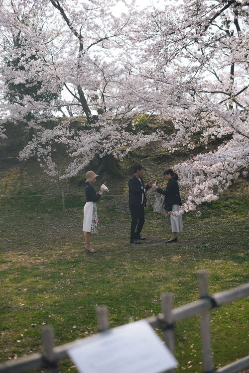 Free stock photo of cherry blossom, cherry blossom background, festival of spring
