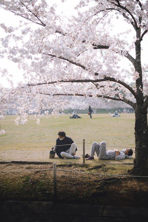 People Resting Under the Sakura Tree