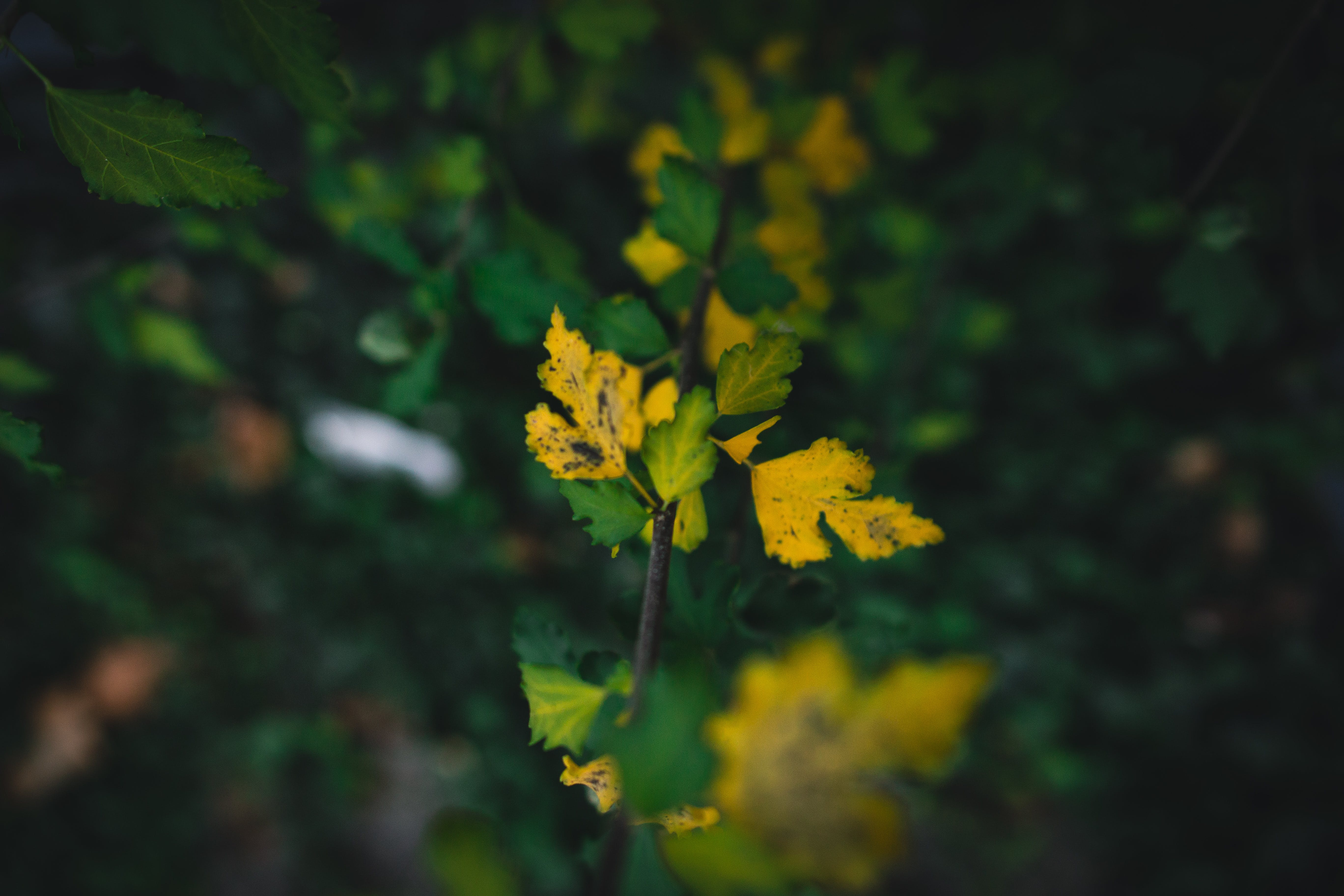 Free stock photo of fall, green, juxtaposition, leaves