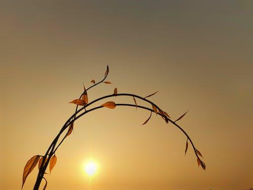 Photos gratuites de atmosphère de soirée, ciel du soir, ciel jaune