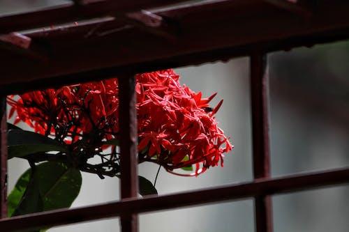 Kostnadsfri bild av # canon1200d, #blommor, #colourplay, #fokus