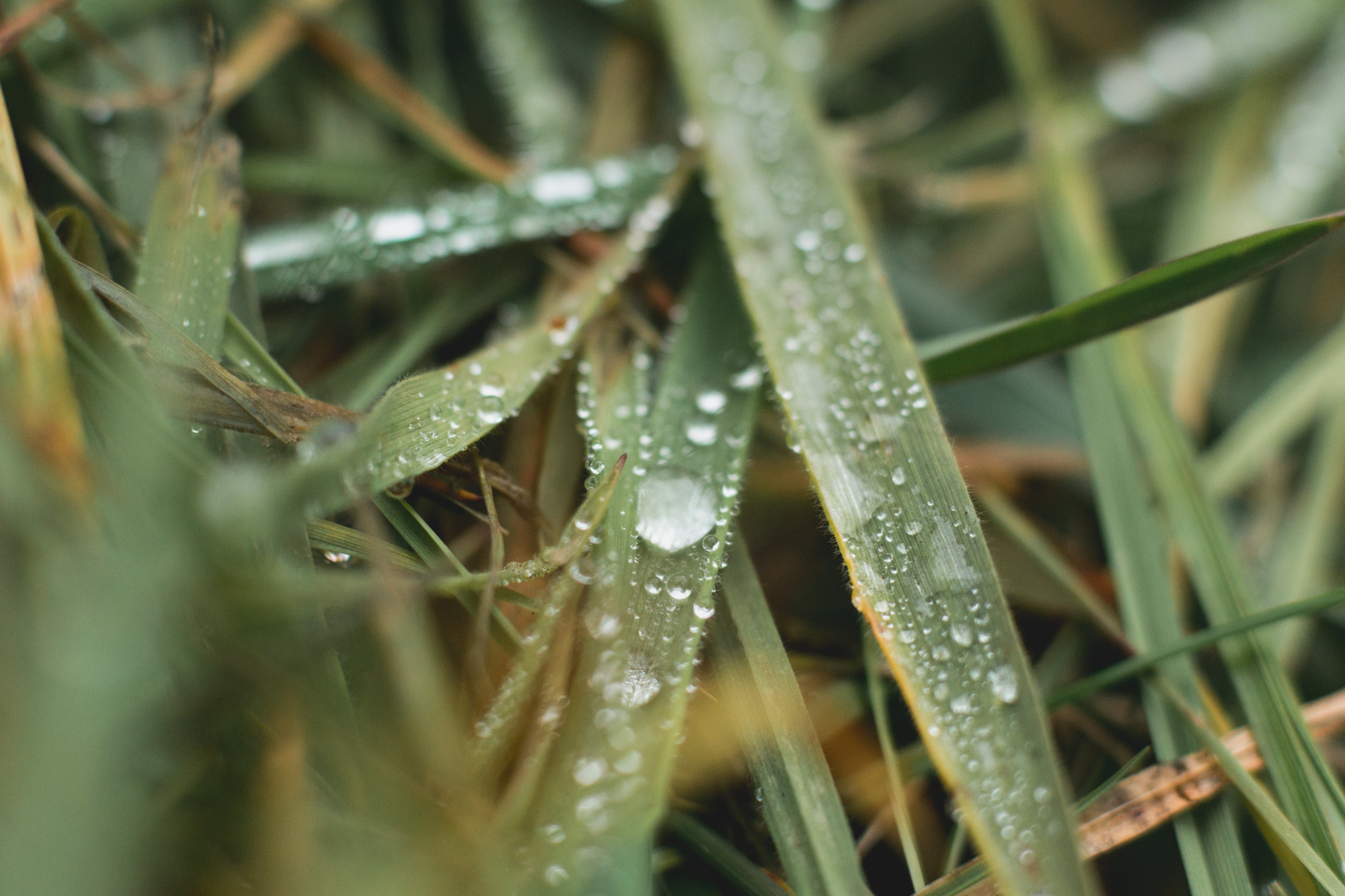 Free stock photo of depth, depth of field, drops, grass