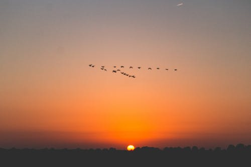 Free stock photo of bird formation, composition, sunset
