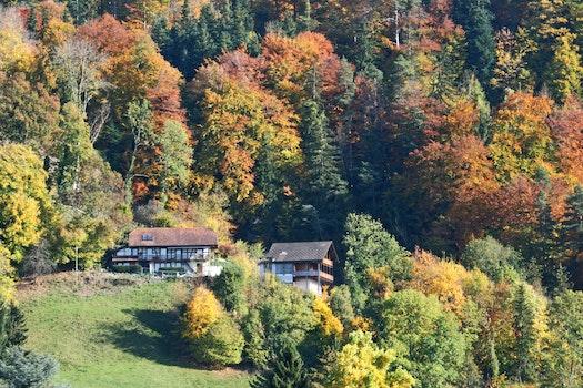 Free stock photo of trees, autumn, colour, lanscape