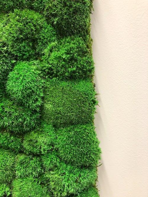 Kostenloses Stock Foto zu abstrakten hintergrund, grüne wand, grünem moos