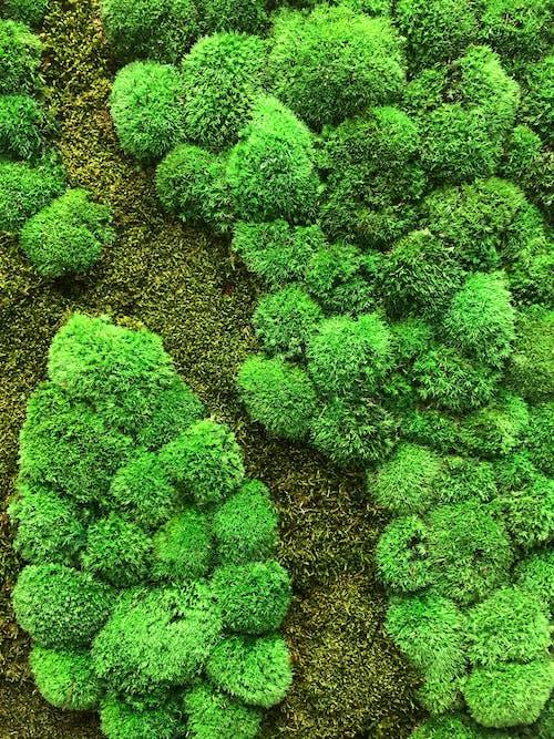 Kostenloses Stock Foto zu grüne wand, grünem hintergrund, grünem moos