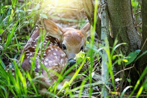 Безкоштовне стокове фото на тему «весняний палевий, дика природа, дикий»