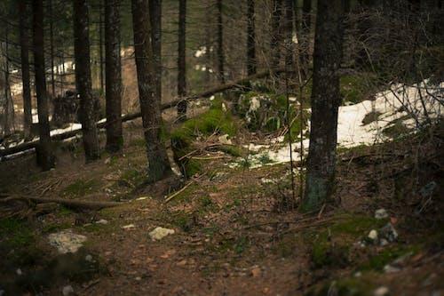 Immagine gratuita di alberi, ambiente, boschi, congelato