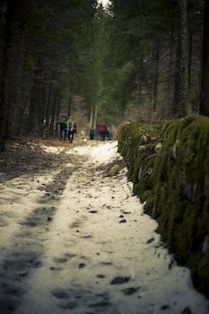 Macro Photography of Snowy Terrain
