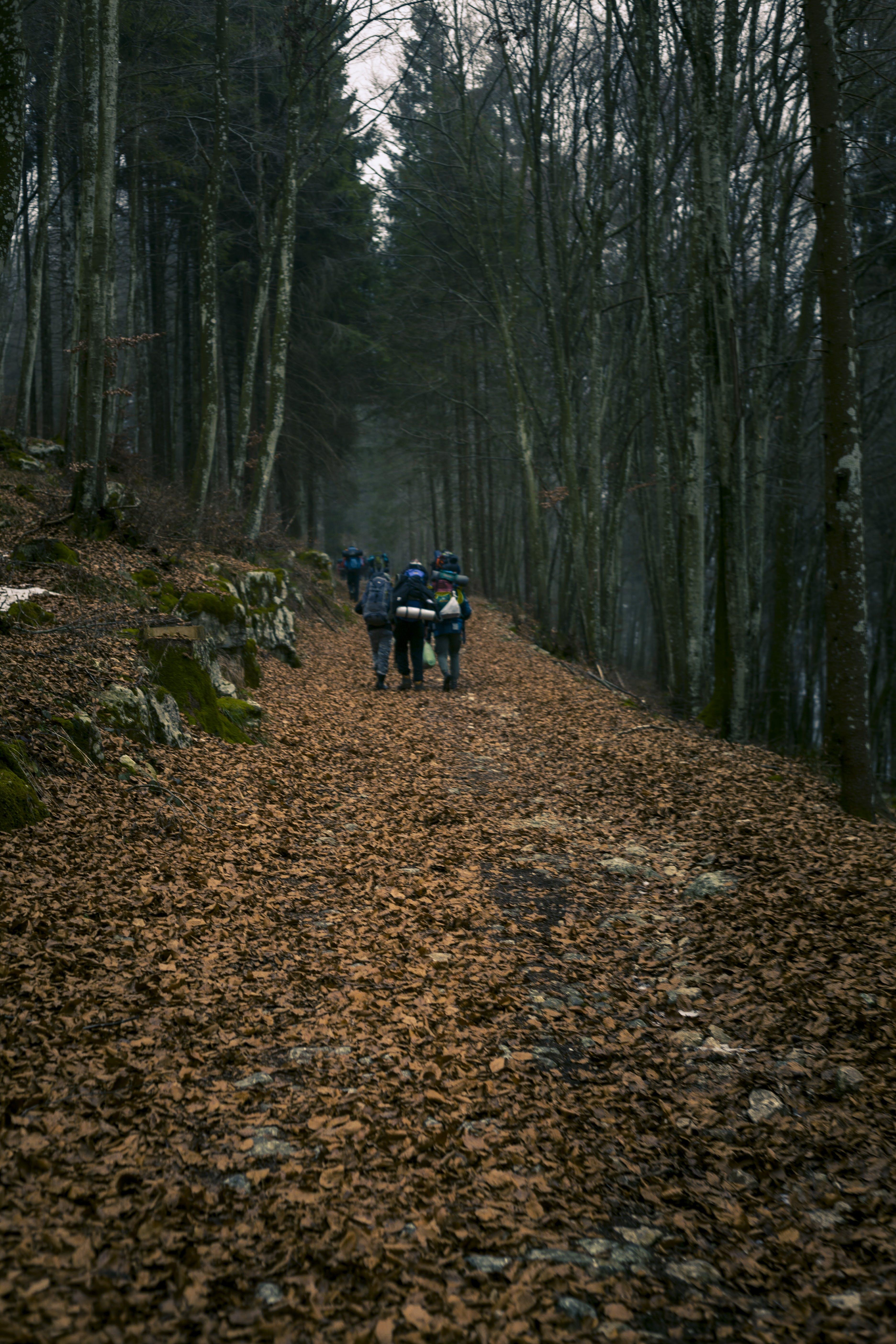Základová fotografie zdarma na téma cesta, chodník, chůze, denní světlo
