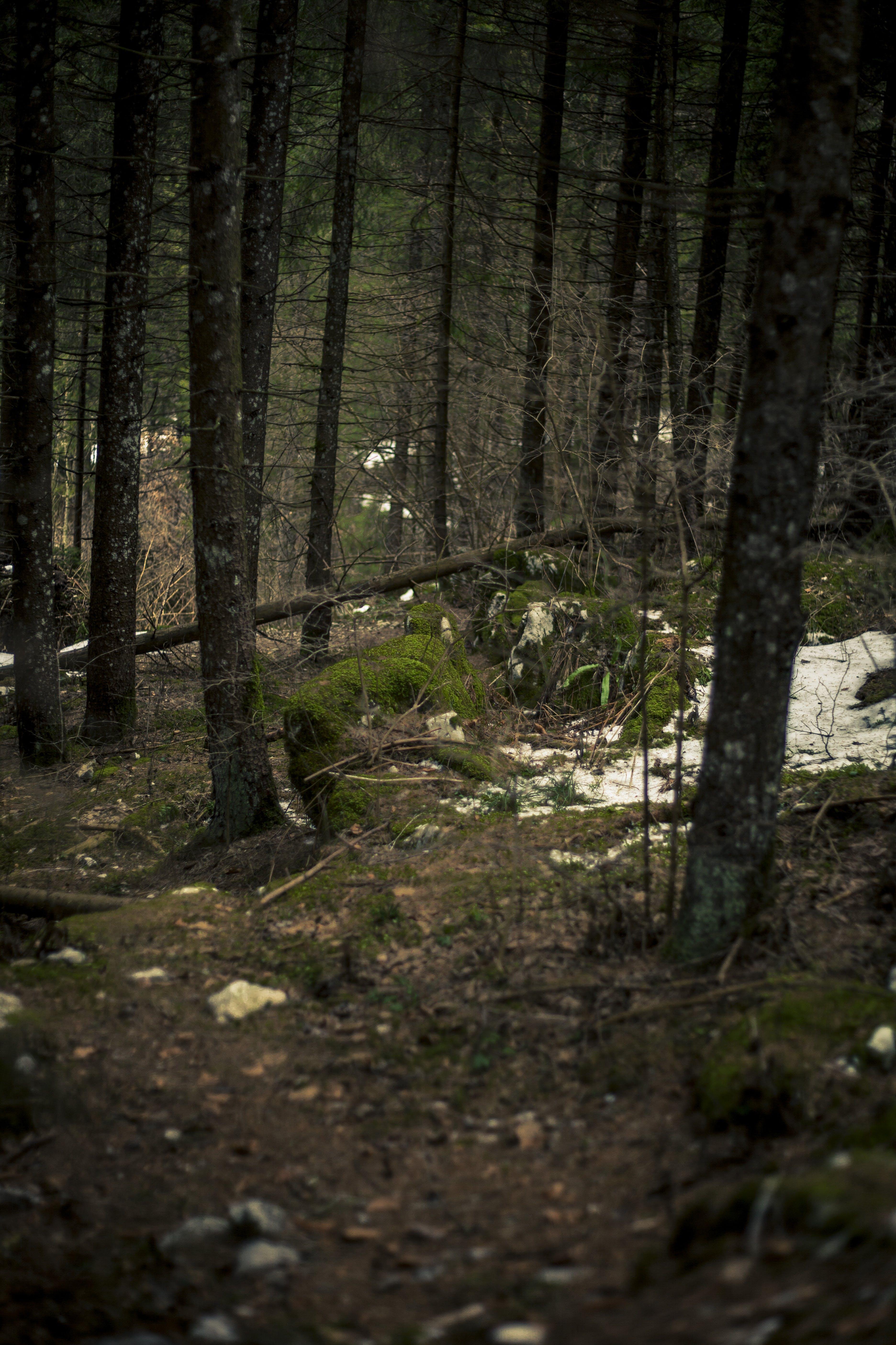 Kostenloses Stock Foto zu bäume, bemoosten felsen, berg, boden