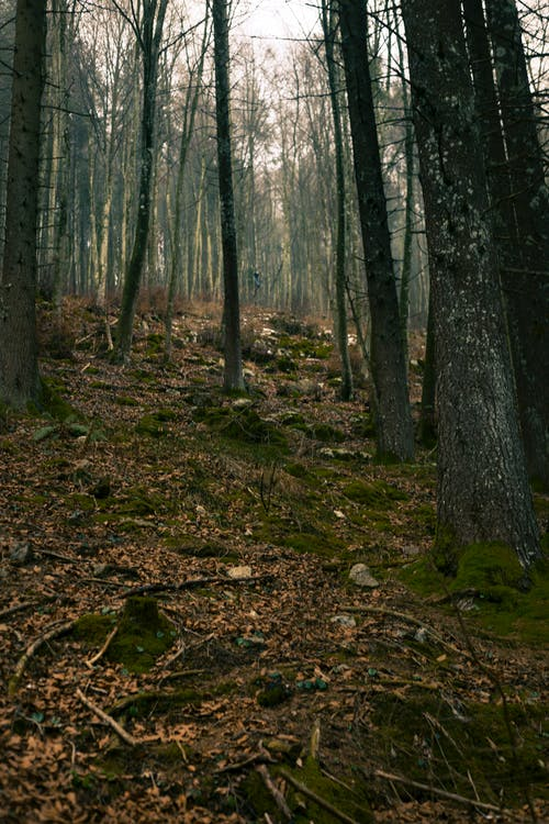 Darmowe zdjęcie z galerii z drzewa, drzewo iglaste, dzień, góra