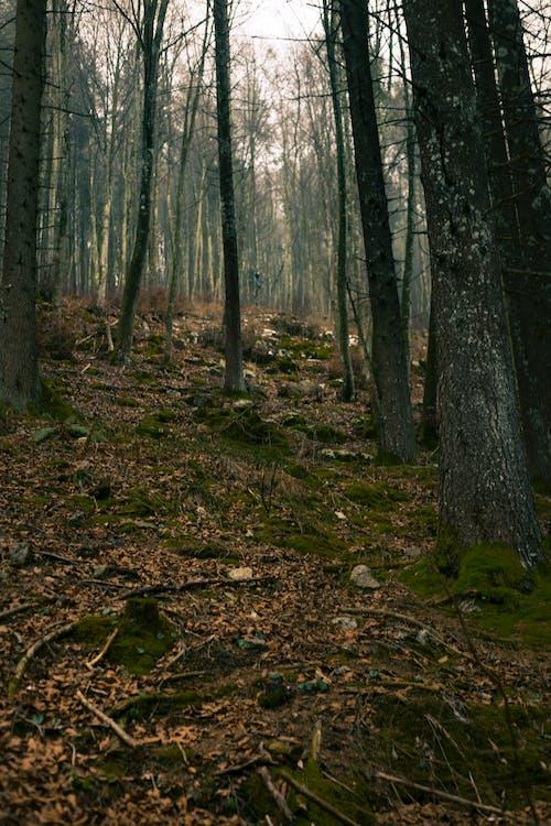 ağaç gövdeleri, ağaçlar, çevre