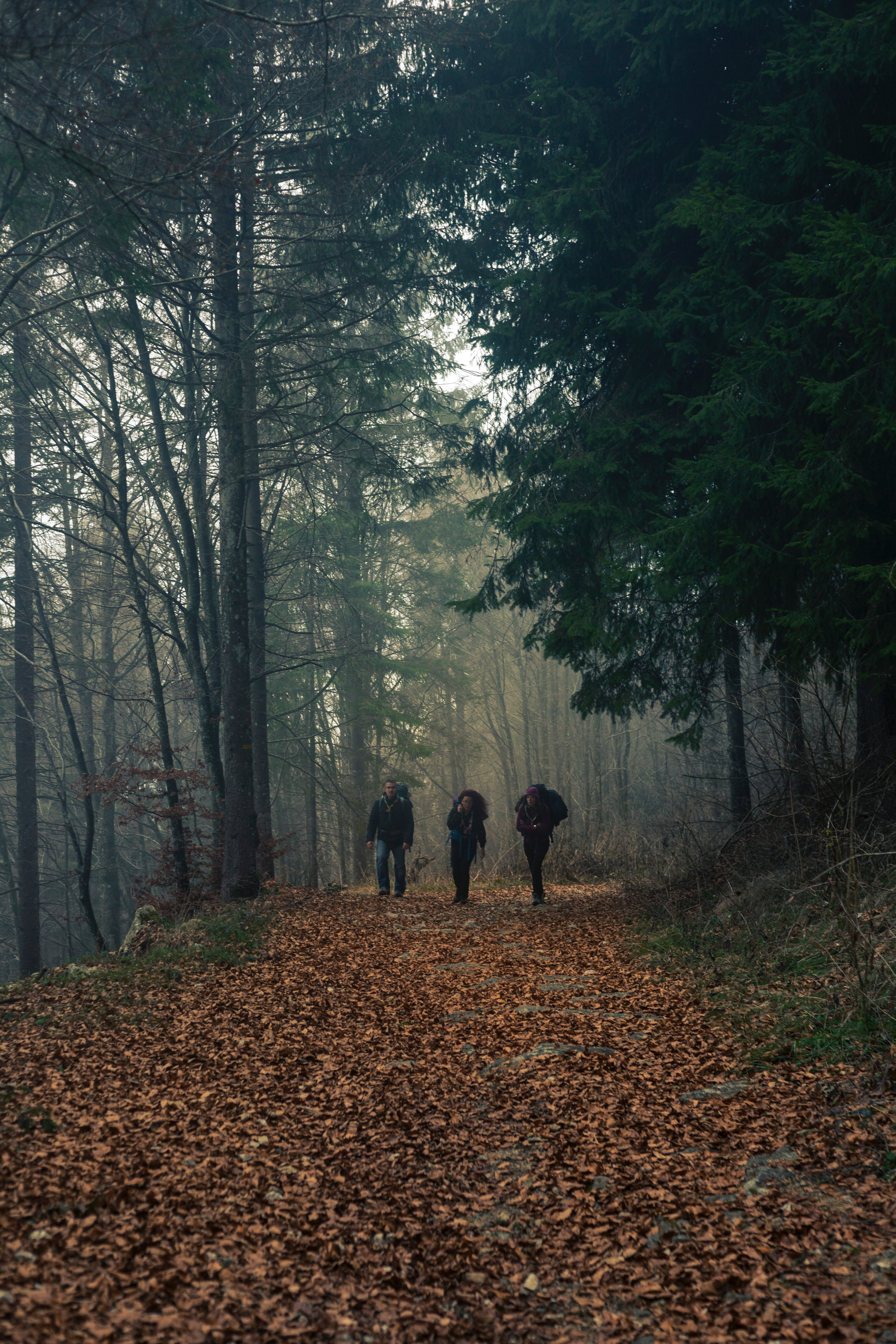 People Walking In Forest 183 Free Stock Photo