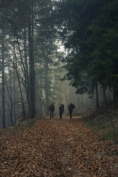 Three Person Walks on Dried Leaf Covered Pathway Surrounded by Trees
