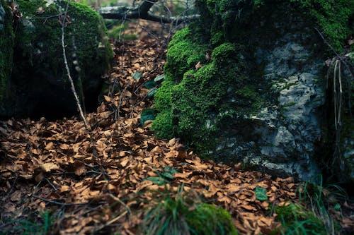 Darmowe zdjęcie z galerii z dzień, gałąź drzewa, gałązki, krajobraz