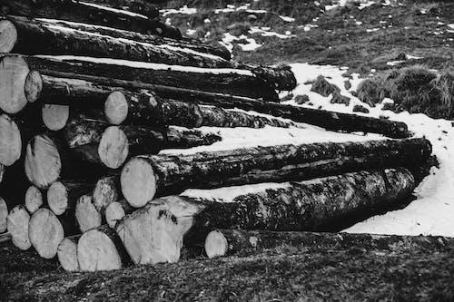 Foto stok gratis alam, batang pohon, batu, beku