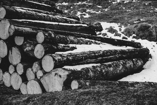 Grayscale Photo of Piled Wood Logs